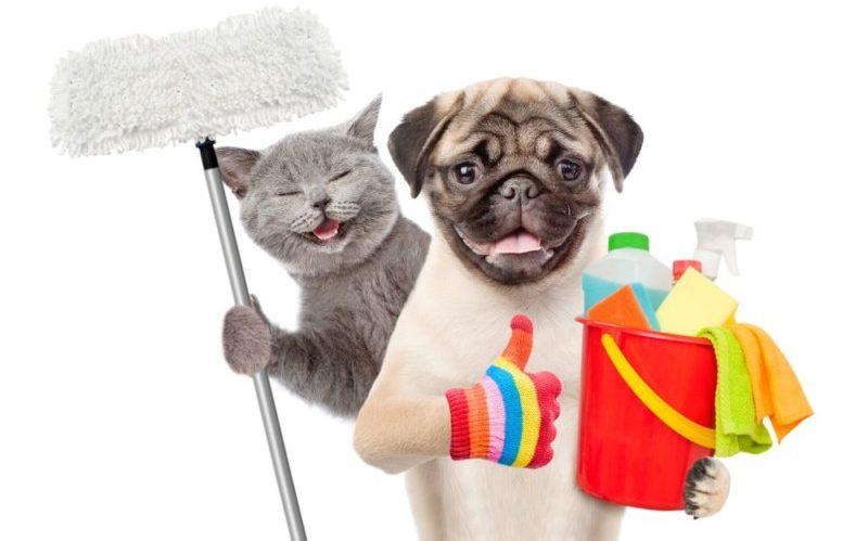 掃除する犬と猫